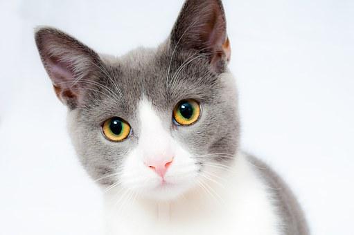 cat-1151519__340